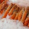 shrimp-21604-pixabay-620